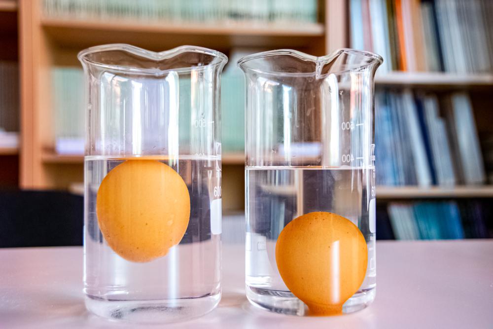 savoir si œuf est bon